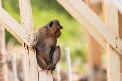O macaco senta-se e espera-se Fotografia de Stock Royalty Free