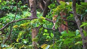 O macaco senta-se em um ramo de árvore em uma floresta úmida filme