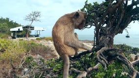 O macaco senta-se em uma árvore vídeos de arquivo