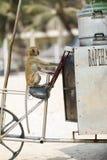 O macaco senta-se em uma bicicleta em uma praia fotos de stock royalty free