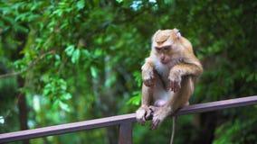 O macaco senta-se em uns trilhos em um parque ao ar livre macacos in vivo video estoque