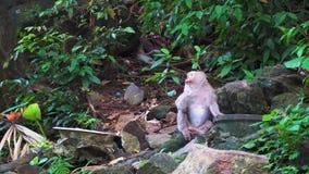 O macaco senta-se nas rochas na floresta úmida e olha-se ao redor vídeos de arquivo