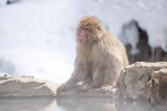 O Macaque senta-se na mola da montanha da água quente Foto de Stock