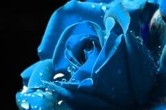 O macro de Celestial Blue aumentou com orvalho imagem de stock royalty free