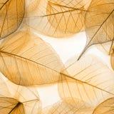 O macro deixa a textura sem emenda Fotos de Stock Royalty Free