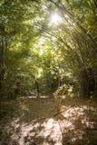 O mais forrest de bambu seco Fotos de Stock Royalty Free