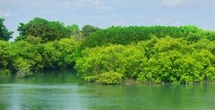 O mam verde cresce a floresta com céu imagem de stock