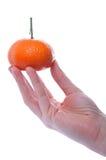 O mandarino Imagem de Stock