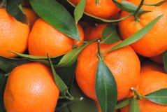 O mandarino Fotos de Stock Royalty Free