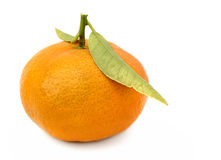 O mandarino Foto de Stock