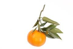 O mandarino com folhas Imagens de Stock