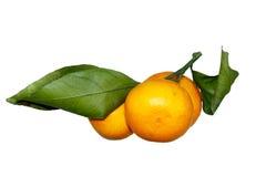 O mandarino com folhas verdes Imagem de Stock Royalty Free