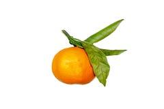 O mandarino com folhas verdes Fotos de Stock