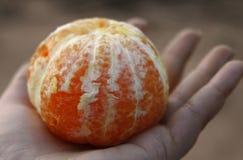 O mandarino de oferecimento da mão Fotos de Stock Royalty Free