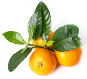 O mandarino delicioso Fotografia de Stock Royalty Free