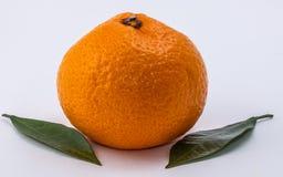 O mandarino no fundo branco imagem de stock
