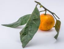 O mandarino no fundo branco Foto de Stock
