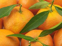 O mandarino suculento Foto de Stock Royalty Free