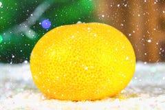 O mandarino - um símbolo do ano novo sob a neve na perspectiva dos ramos do abeto Imagens de Stock Royalty Free