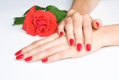 O manicure e o crimson vermelhos levantaram-se fotos de stock