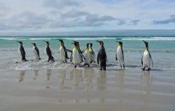 O março do rei Penguins Fotos de Stock Royalty Free