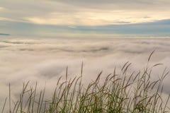 O mar da névoa e a grama florescem no fundo do nascer do sol Imagens de Stock