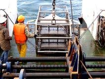 O mar de Okhotsk/Rússia - 19 de julho de 2015: O desenvolvimento epibenthic do pequeno trenó foto de stock