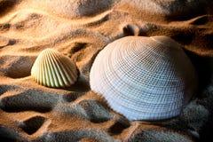 O mar descasca as conchas do mar, shell do mar da praia - panorâmico - com l fotos de stock royalty free