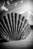 O mar descasca as conchas do mar, shell do mar da praia - panorâmico - com l fotografia de stock royalty free
