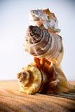 O mar descasca as conchas do mar, shell do mar da praia - panorâmico - com l fotografia de stock