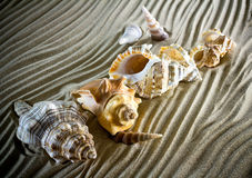 O mar descasca as conchas do mar, shell do mar da praia - panorâmico - com l foto de stock royalty free
