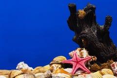 O mar descasca a coleção Fotografia de Stock