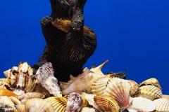 O mar descasca a coleção Fotos de Stock Royalty Free