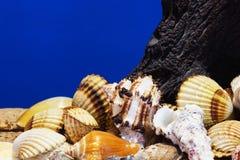 O mar descasca a coleção Fotografia de Stock Royalty Free