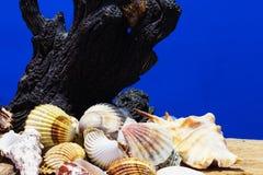 O mar descasca a coleção Fotos de Stock