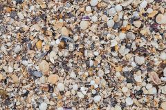 O mar descasca o fundo Textura do shell do mar imagens de stock