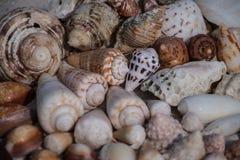 O mar descasca marrom e branco e arenoso na praia Imagens de Stock Royalty Free