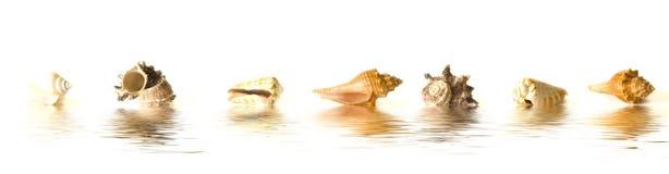 O mar descasca reflexões fotografia de stock royalty free