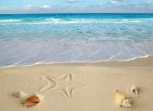 O mar descasca a turquesa tropical as Caraíbas dos starfish Fotos de Stock Royalty Free