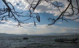 O mar do gallilee com ramos e um barco Fotos de Stock