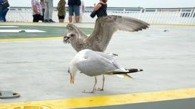 O mar do pássaro da gaivota come o alimento vídeos de arquivo