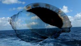 O mar do ver?o descasca o fundo wallpaper imagem de stock