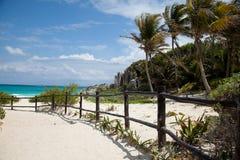 O mar e as palmeiras Fotos de Stock Royalty Free