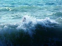 O Mar Negro - onda branca foto de stock