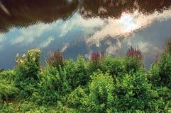 O mato e as flores no banco do rio Dommel com nuvens refletiram em suas águas calmas no s-Hertogenbosch fotografia de stock