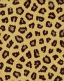 O media do leopardo mancha a pele curta Fotografia de Stock Royalty Free