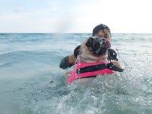 O medo bonito do pug do cachorrinho do cão e a água receosa nadam na praia, Koh Kood, Tailândia & x28; Ilha de Kood, province& x2 Imagens de Stock