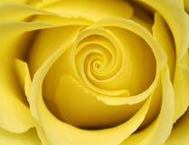 O meio do amarelo levantou-se Foto de Stock
