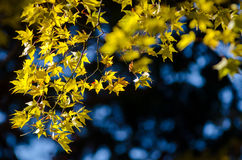 O melhor outono em Japão Imagem de Stock
