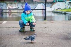 O menino alimenta o pombo fotos de stock